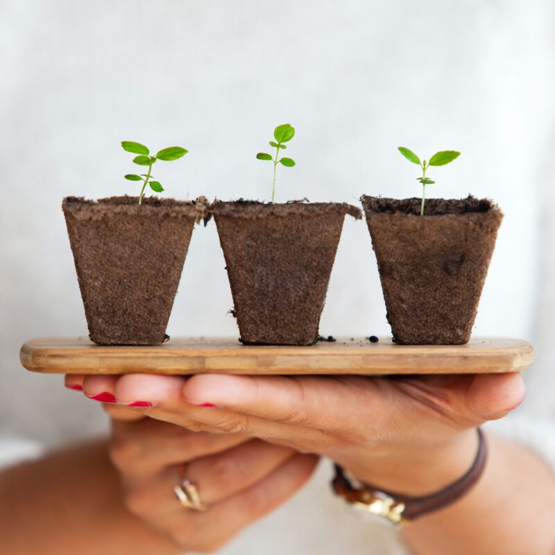 Person holding three small plants